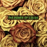 The Rebrand and The Power of Color
