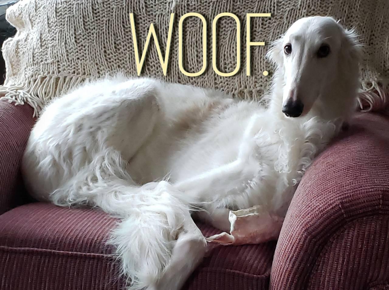 Rebranding a Company: Woof! Woof!