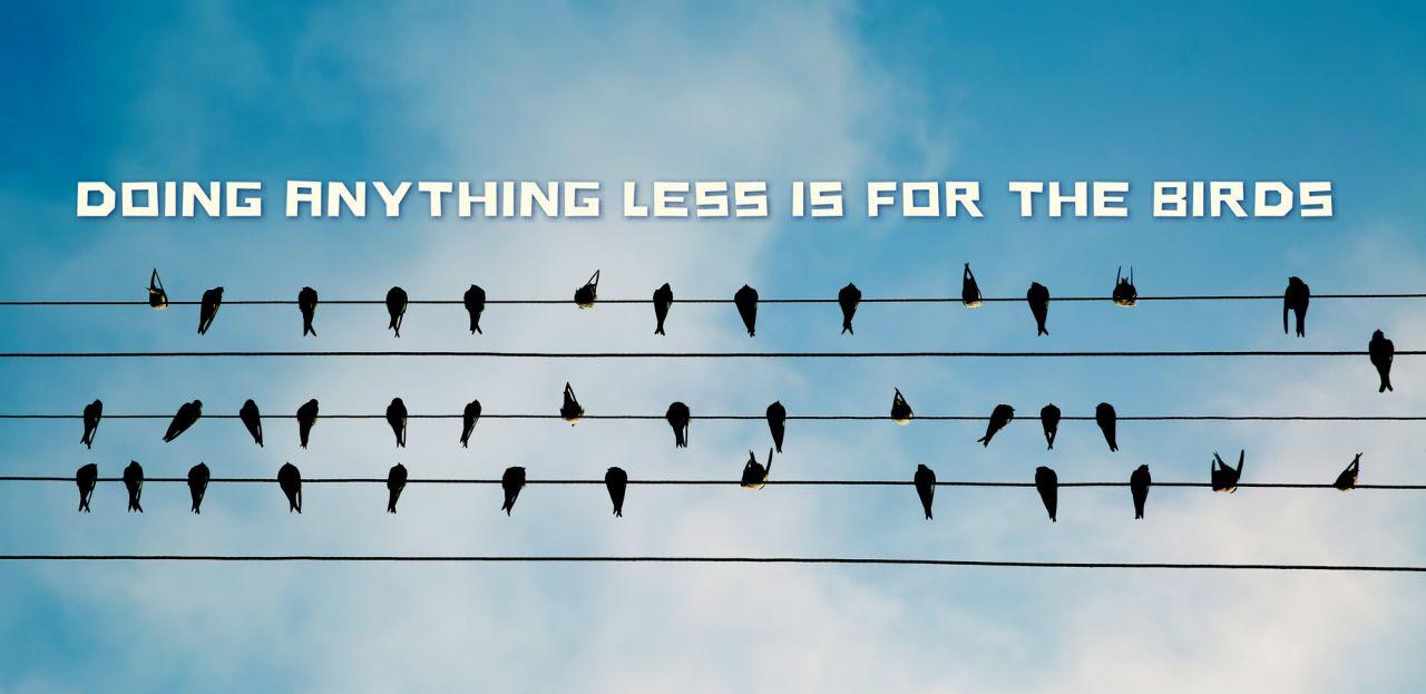 STORYTELLING SECRET is for the birds